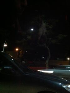Meu primeiro engarrafamento teve uma ilustre Lua cheia...